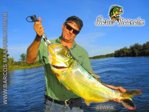 Pescaria na amazônia BARCO HOTEL MAANAIM Apapá